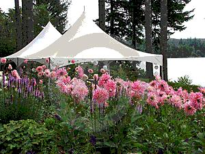 Where to find 10  X 10  WHITE HIGH PEAK FRAME TENT in Longview